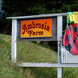 Ambrosia Farm roadside sign